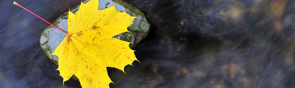 Autumn-Leaf-In-A-Stream-24959240