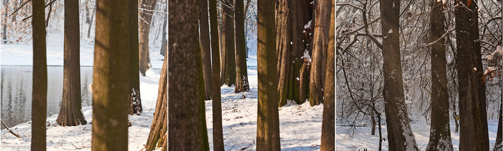Snow-covered-tree-trunks-and-b-116336207